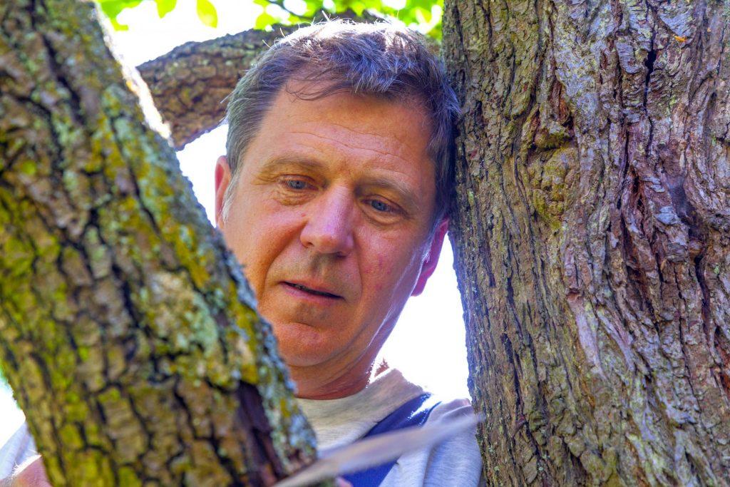 man looking at trees