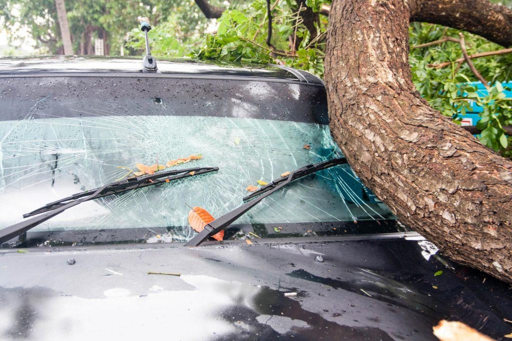 fallen trees danger accident