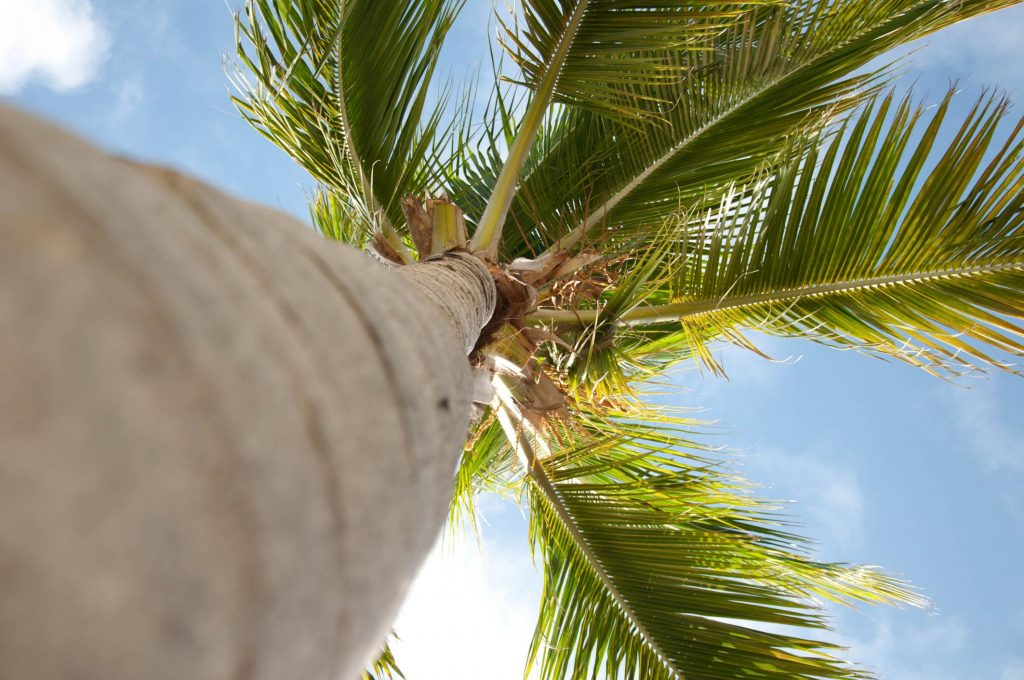 looking up to palm tree