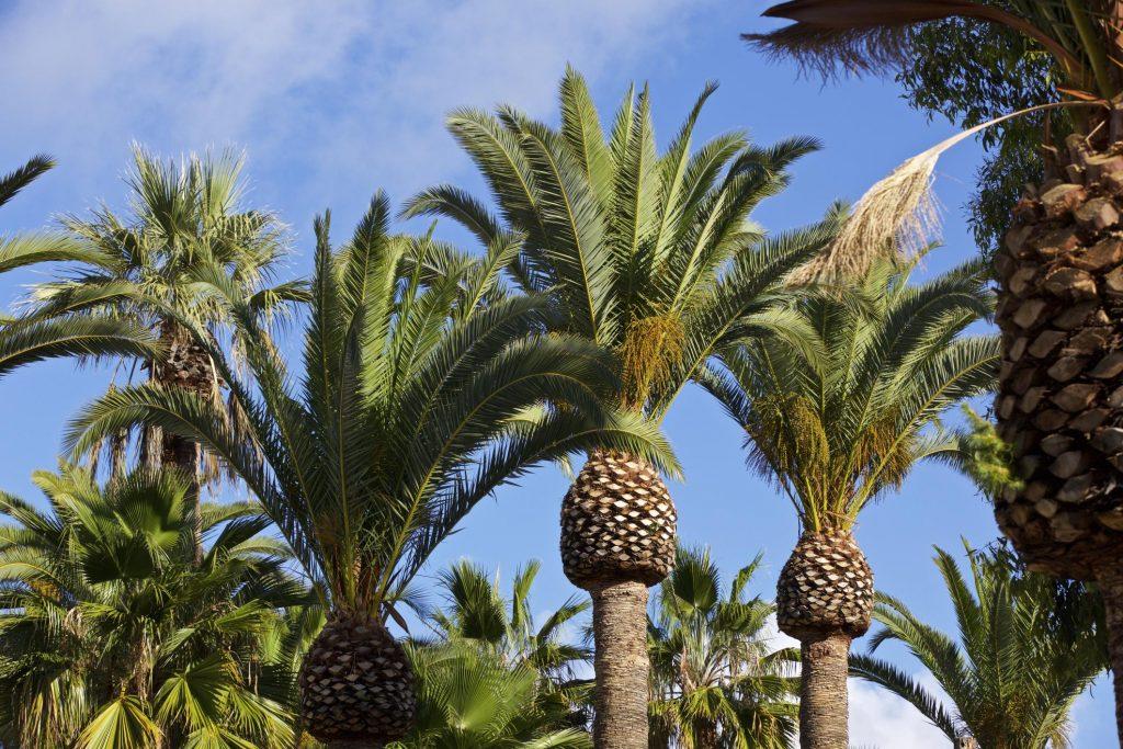 close up palm trees