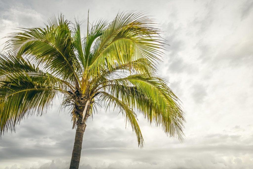 plam tree under the sky