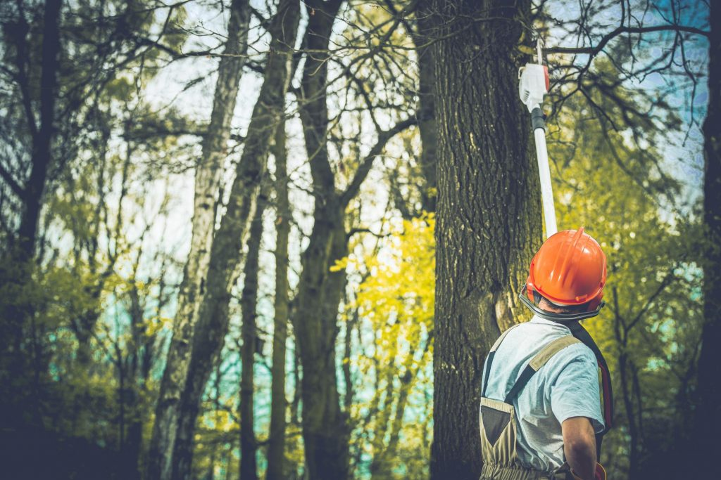 worker looking up at trees
