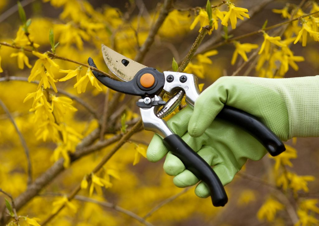 worker doing tree pruning
