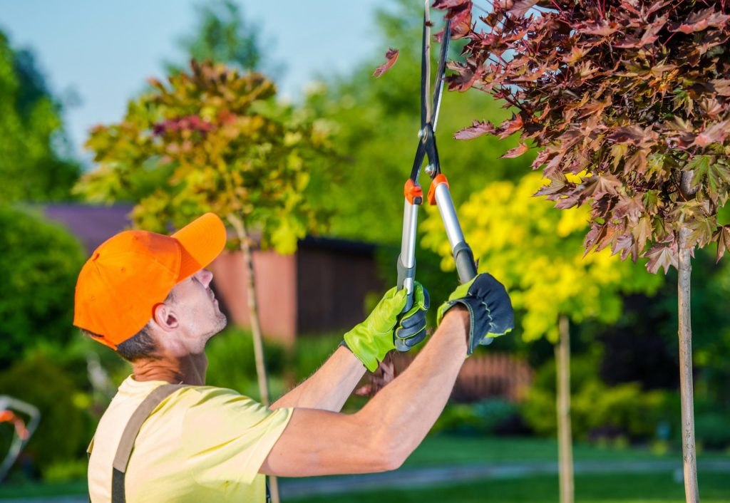 worker doing tree trimming